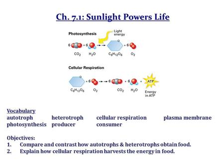 Ch. 7.1: Sunlight Powers Life Vocabulary autotrophheterotrophcellular respirationplasma membrane photosynthesisproducerconsumer Objectives: 1.Compare and.
