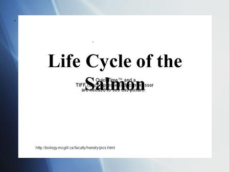 Life Cycle of the Salmon