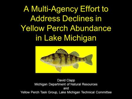 A Multi-Agency Effort to Address Declines in Yellow Perch Abundance in Lake Michigan David Clapp Michigan Department of Natural Resources and Yellow Perch.