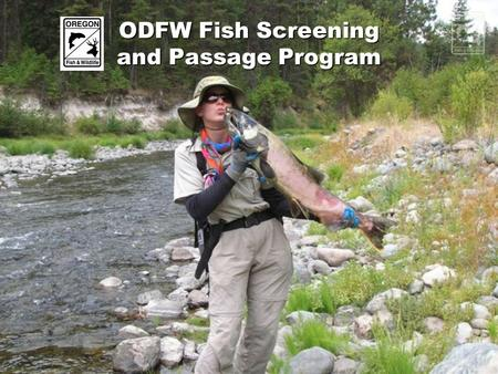 ODFW Fish Screening and Passage Program. Program Structure Administrative Specialist Program Manager (HQ) Office Specialist Screen Shop Managers (Field)