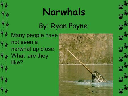 Narwhals By: Ryan Payne Many people have not seen a narwhal up close. What are they like?