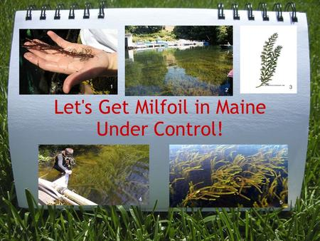 Let's Get Milfoil in Maine Under Control! 3 2 4 5 1.