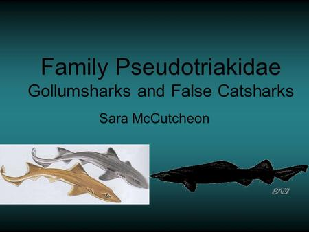 Family Pseudotriakidae Gollumsharks and False Catsharks