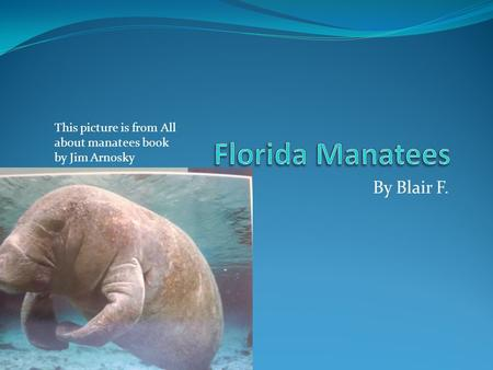 By Blair F. This picture is from All about manatees book by Jim Arnosky.