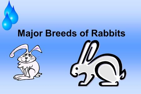Major Breeds of Rabbits. Rabbits Been developed into forty-five recognized breeds. These are divided into five weight categories: Dwarf or Miniature-Himalayan,