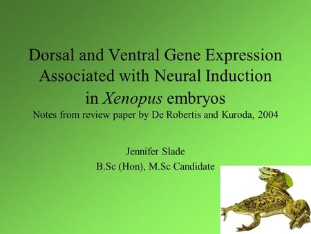 Dorsal and Ventral Gene Expression Associated with Neural Induction in Xenopus embryos Notes from review paper by De Robertis and Kuroda, 2004 Jennifer.