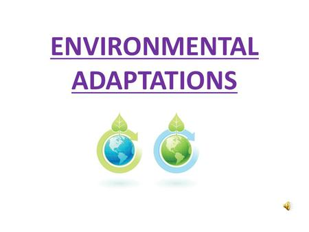 ENVIRONMENTAL ADAPTATIONS 1)Woodland river Q: What adaptations are necessary for an organism to survive successfully in this environment?