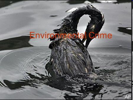 Environmental Crime. What is environmental crime? As it suggests in the title, environmental crimes are crimes that damage the environment. It is a relatively.