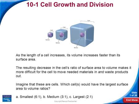 End Show Slide 1 of 38 Copyright Pearson Prentice Hall 10-1 Cell Growth and Division As the length of a cell increases, its volume increases faster than.
