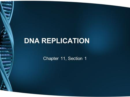 DNA REPLICATION Chapter 11, Section 1. DNA Review What is the building block of DNA? Nucleotides (Sugar, Phosphate, Base) What is the shape of DNA? Double.