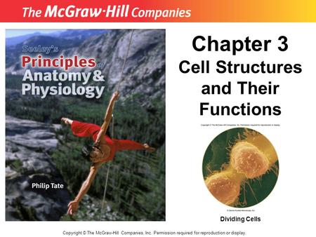 Copyright © The McGraw-Hill Companies, Inc. Permission required for reproduction or display. Chapter 3 Cell Structures and Their Functions Dividing Cells.