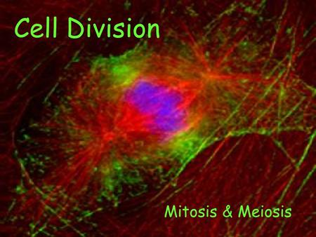 Cell Division Mitosis & Meiosis. Cell Division What is it? Why do Cells do it? Why is it important to me?