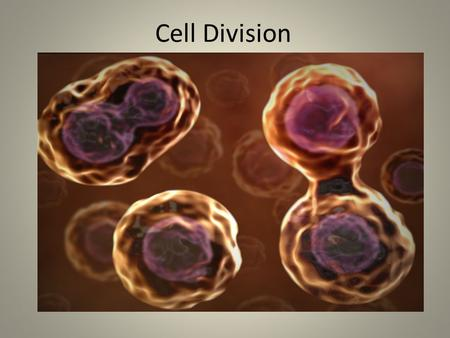 Cell Division. Learning Objective: Today, we will describe the steps of cell division. How do these two pictures show division? Discuss with your partner.