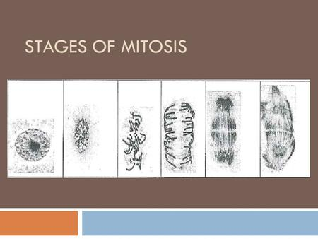STAGES OF MITOSIS. What's this stuff? Nuclear membrane Chromosomes Cell membrane.