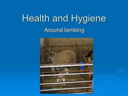 Health and Hygiene Around lambing.