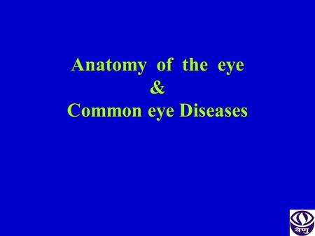 Anatomy of the eye & Common eye Diseases. Bony orbit Eyelids Eyeball and optic nerve Vessels and nerves.
