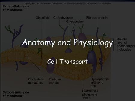 Anatomy and Physiology Cell Transport. Types of Transport Diffusion Characteristics –Particles move from an area of high concentration to an area of low.