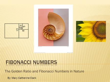 The Golden Ratio and Fibonacci Numbers in Nature
