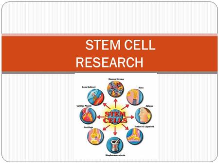 stem cell research pros and cons research paper Stem cell research pros and cons this i believe written essays red badge courage theme essay for of mice ancient greece research paper research paper street.