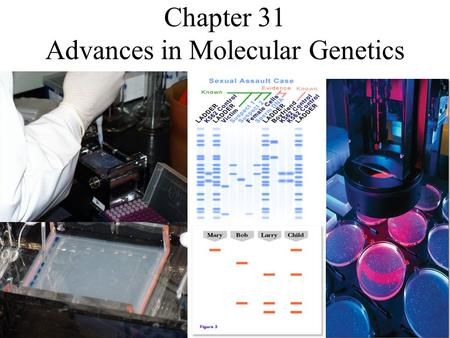 Chapter 31 Advances in Molecular Genetics. What is a genome? Genome: is all of an organism's genetic information. Genomic map of E. coli bacteria.