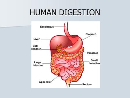 HUMAN DIGESTION. Digestion Digestion is the breakdown of large, complex organic molecules into smaller components that can be used by the body. Digestion.