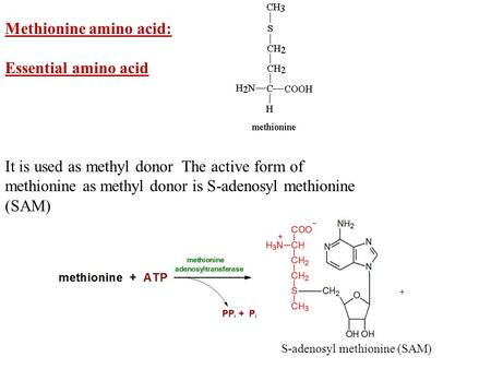 Methionine amino acid: Essential amino acid