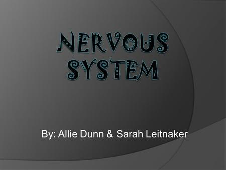 By: Allie Dunn & Sarah Leitnaker. Evolution of Nervous system  Hydra (Cndarian)- have one or more nerve net, made up of neurons.  Flatworm (planarians)-