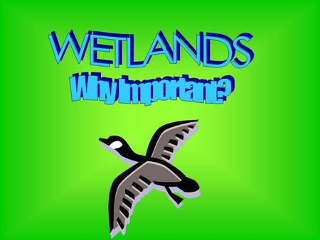 """Wetlands"" describes a variety of areas where plants and animals especially suited to wet environments can be found. Wetlands are among the richest."
