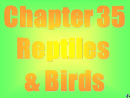 Class Reptilia: Reptiles Ex: Lizards, Snakes, Turtles & Crocodiles.