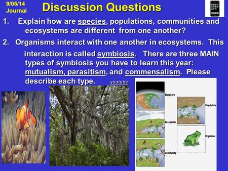 Discussion Questions Discussion Questions 1.Explain how are species, populations, communities and ecosystems are different from one another? 2. Organisms.