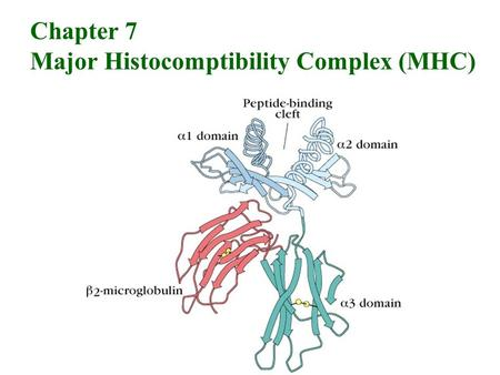 Chapter 7 Major Histocomptibility Complex (MHC). Processing and presentation of exogenous and endogenous antigens.