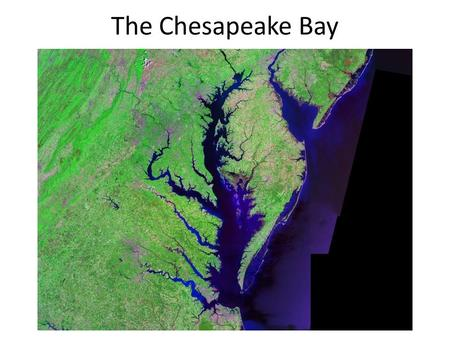 The Chesapeake Bay. The Chesapeake Bay by the Numbers The watershed includes parts of six states and the District of Columbia, with headwaters in Cooperstown,