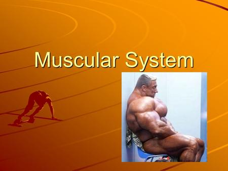 Muscular System. MUSCLES Types of Muscle Tissue Humans have three different types of muscle tissue. –Smooth Muscle –Cardiac Muscle –Skeletal Muscle.