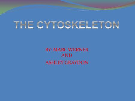 BY: MARC WERNER AND ASHLEY GRAYDON. CYTOSKELETON FUNCTIONS  Keeps organelles in anchored locations  Establishes and supports the shape of the cell 