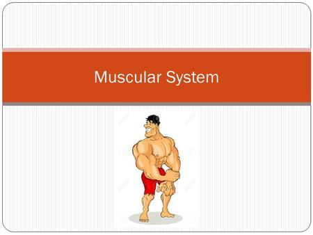 Muscular System. Functions of the Muscular System Allows movement Maintains posture Stabilizes joints Gives the body shape Generates heat.