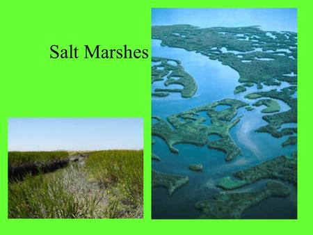 Salt Marshes. Salt marshes are coastal wetlands rich in marine life. They are sometimes called tidal marshes, because they occur in the zone between low.