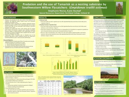 Predation and the use of Tamarisk as a nesting substrate by Southwestern Willow Flycatchers (Empidonax traillii extimus) Stephanie Muise, Katie Stumpf.