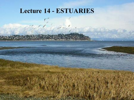 Lecture 14 - ESTUARIES. Last Ice Age Classification of Estuaries - Geological 1.Coastal Plain Estuary (= Drowned River Estuary)