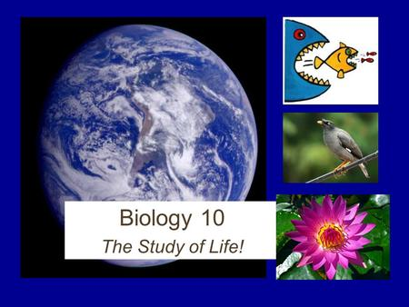 Biology 10 The Study of Life! First, start thinking of questions… What types of animals or plants are the most interesting to you? What would you like.