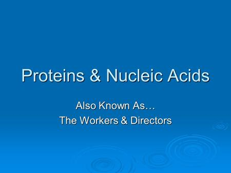 Proteins & Nucleic Acids Also Known As… The Workers & Directors.