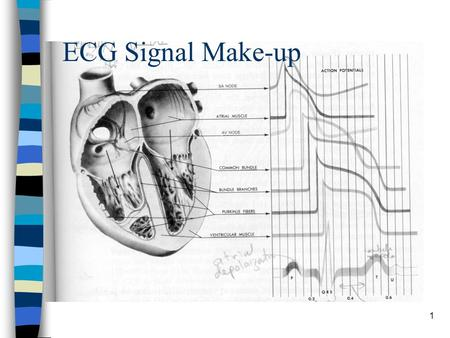 1 ECG Signal Make-up. 2 Biopotential Requirements n High Input Impedance –Minimum loading of the signal being measured –Minimum 10M  n Input circuit.
