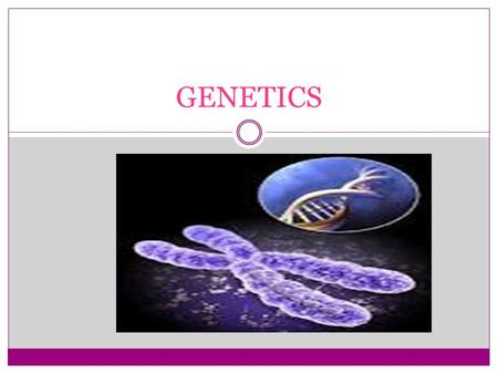 GENETICS. What are proteins made of? Amino Acids Where are proteins made? Ribosome Where are chromosomes located? Nucleus What is the function of Chromosomes?