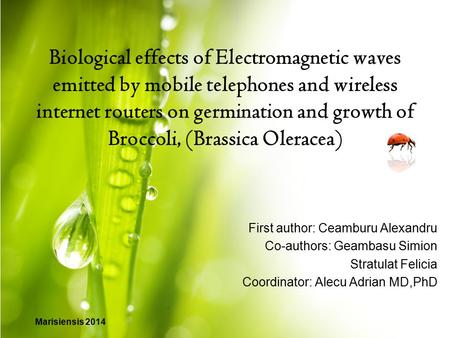 Biological effects of Electromagnetic waves emitted by mobile telephones and wireless internet routers on germination and growth of Broccoli, (Brassica.