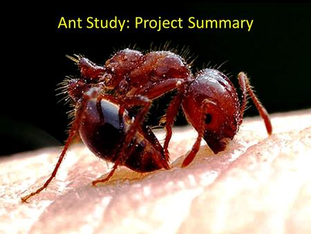Ant Study: Project Summary. Why is understanding habitat selection important?