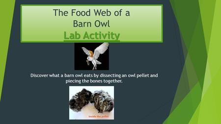 Lab Activity The Food Web of a Barn Owl Lab Activity Discover what a barn owl eats by dissecting an owl pellet and piecing the bones together.