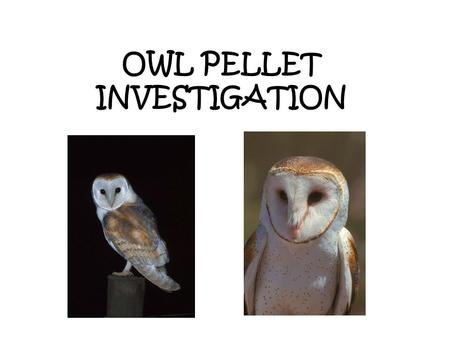 OWL PELLET INVESTIGATION. Learning Goals 1.Dissect one complete pellet of a barn owl 2.Identify the animal(s) whose bones are found in the pellets 3.Identify.