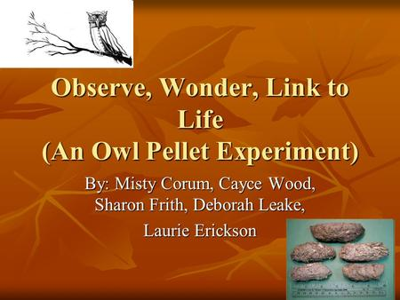 Observe, Wonder, Link to Life (An Owl Pellet Experiment) By: Misty Corum, Cayce Wood, Sharon Frith, Deborah Leake, Laurie Erickson.