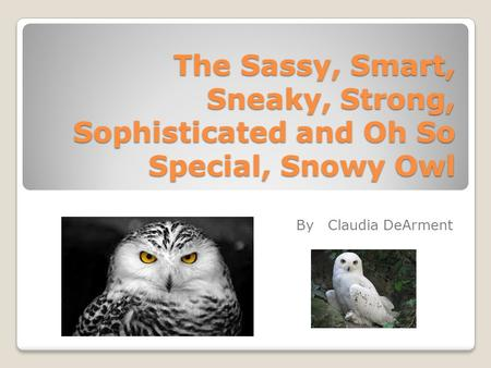 The Sassy, Smart, Sneaky, Strong, Sophisticated and Oh So Special, Snowy Owl By Claudia DeArment.