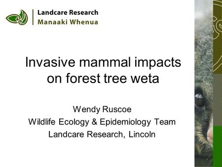 Invasive mammal impacts on forest tree weta Wendy Ruscoe Wildlife Ecology & Epidemiology Team Landcare Research, Lincoln.