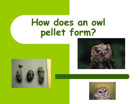 How does an owl pellet form? Catching the prey… Before an owl pellet can start to be formed, the owl must first catch its prey. Owls are carnivores and.
